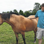 State Road horse sanctuary seeking volunteers, donations
